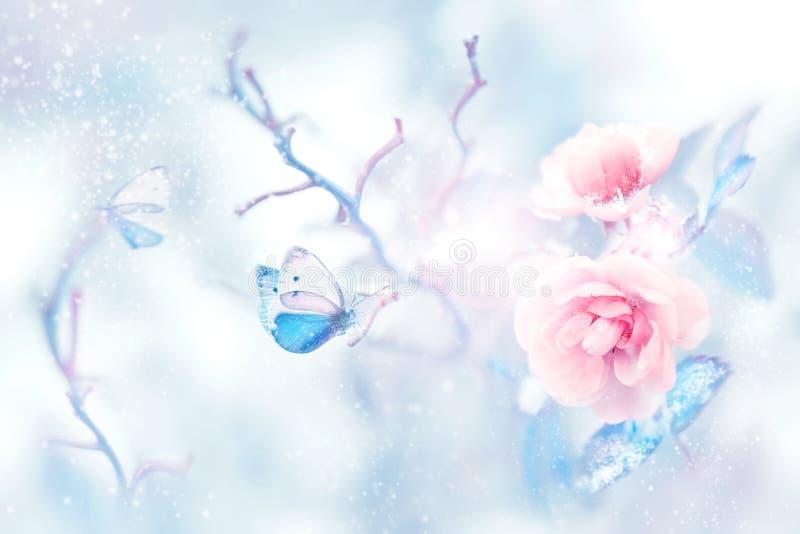 Μπλε πεταλούδα στο χιόνι στα ρόδινα τριαντάφυλλα σε έναν κήπο νεράιδων Καλλιτεχνική εικόνα Χριστουγέννων απεικόνιση αποθεμάτων
