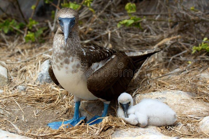Μπλε πληρωμένος γκαφατζής με το μωρό στοκ φωτογραφία με δικαίωμα ελεύθερης χρήσης
