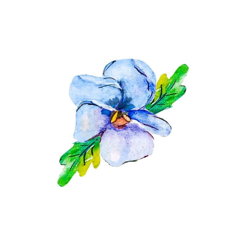 Μπλε πορφυρό floral βοτανικό λουλούδι viola Άγριο φύλλο άνοιξη r απεικόνιση αποθεμάτων