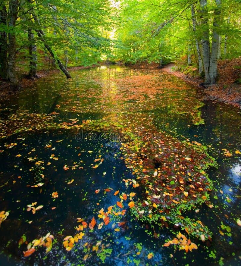 μπλε ποταμός στοκ εικόνες