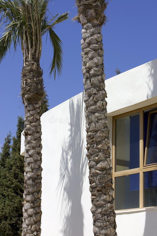 μπλε που χτίζει το νέο λευκό δέντρων ουρανού φοινικών στοκ φωτογραφία με δικαίωμα ελεύθερης χρήσης
