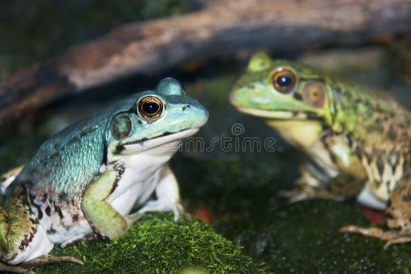μπλε στενός πράσινος επάν&omega στοκ φωτογραφία