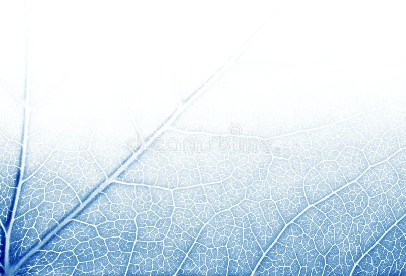μπλε τόνοι σύστασης φύλλω& στοκ φωτογραφία με δικαίωμα ελεύθερης χρήσης