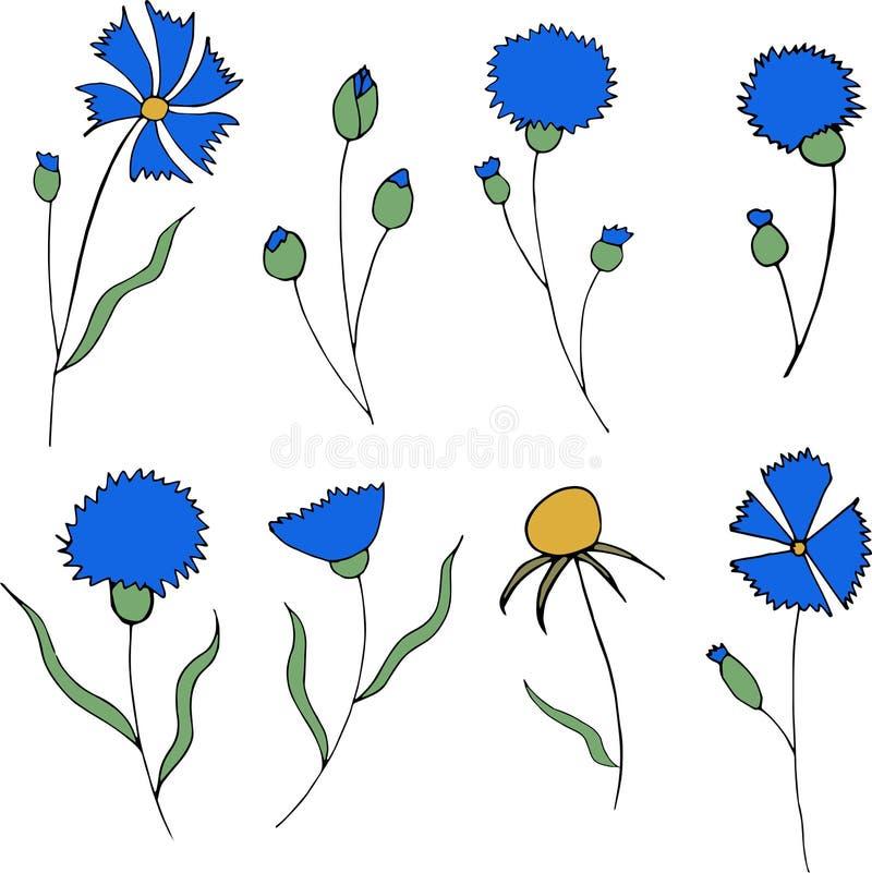 Μπλε cornflowers και φύλλα που απομονώνονται στο άσπρο υπόβαθρο απεικόνιση αποθεμάτων