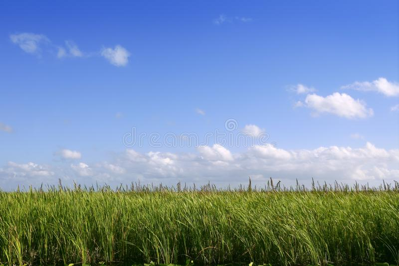 μπλε everglades υγρότοποι ουραν&om στοκ φωτογραφία με δικαίωμα ελεύθερης χρήσης