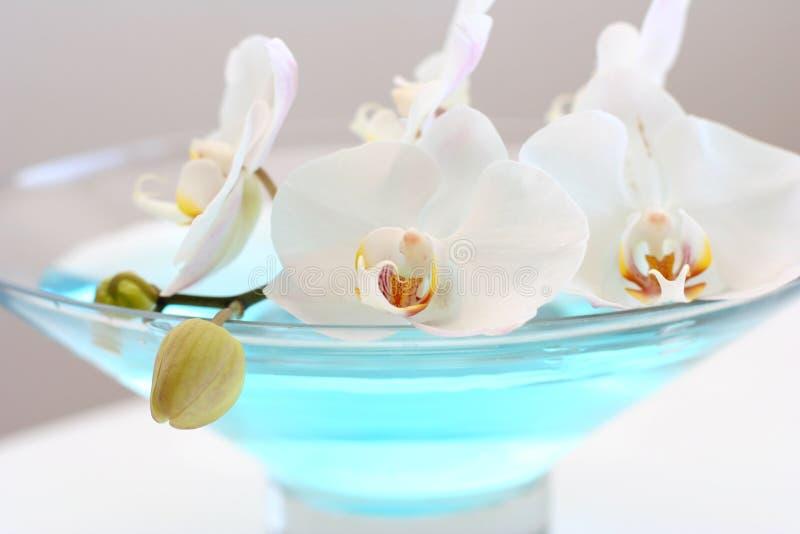 μπλε orchid vase στοκ εικόνες