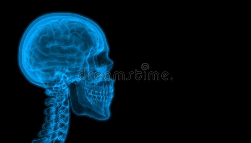 Μπλε Redux ακτίνας X ανίχνευσης εγκεφάλου - 2018 απεικόνιση αποθεμάτων