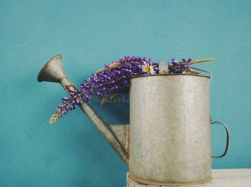 μπορέστε πότισμα λουλο&upsilo στοκ φωτογραφία με δικαίωμα ελεύθερης χρήσης
