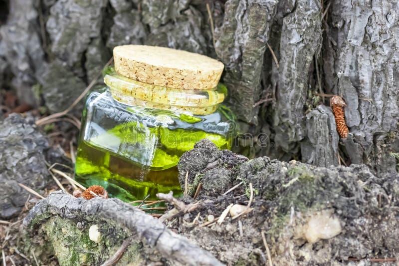 Μπουκάλι γυαλιού με το φελλό ΚΑΠ με το πράσινος-κίτρινο πετρέλαιο νέκταρ Τοποθετημένος κάτω από ένα κωνοφόρο δέντρο στοκ εικόνες