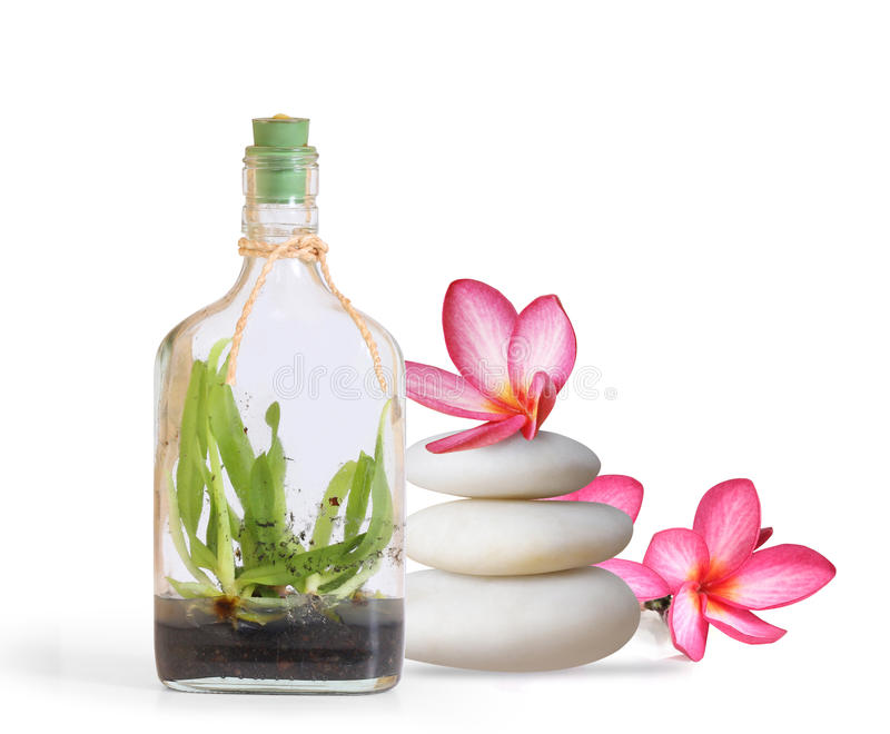 Μπουκάλι των λουλουδιών ουσιαστικού πετρελαίου και orchid στοκ εικόνα