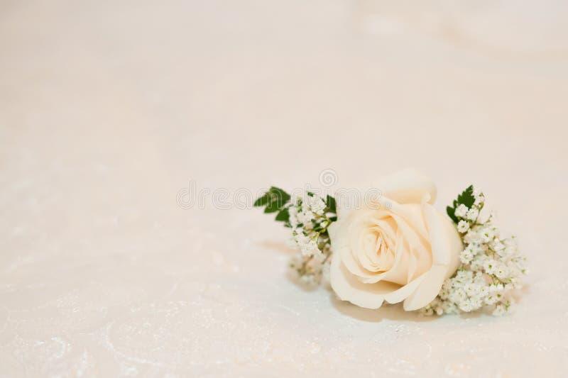 Μπουμπούκι τριαντάφυλλου, στοκ φωτογραφίες