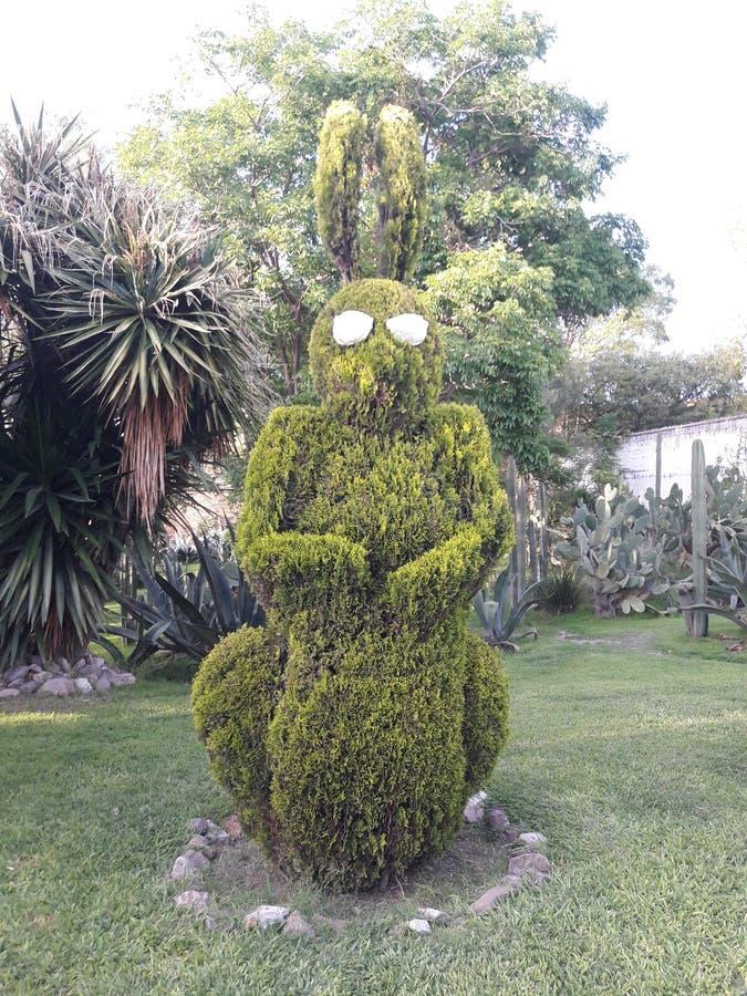 Μπους γλυπτός σε ένα κουνέλι με τα γυαλιά ηλίου σε SAN Miguel de Allende Μεξικό στοκ εικόνες