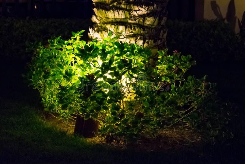 Μπους και φλοιός του φοίνικα, αναδρομικά φωτισμένοι στο σκοτάδι στοκ φωτογραφία με δικαίωμα ελεύθερης χρήσης