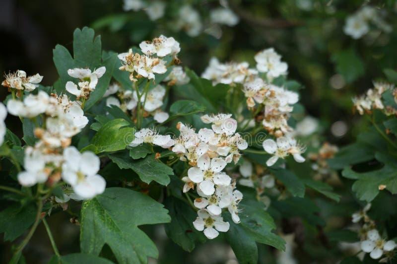 Μπους που αντέχει τα λουλούδια στοκ φωτογραφίες