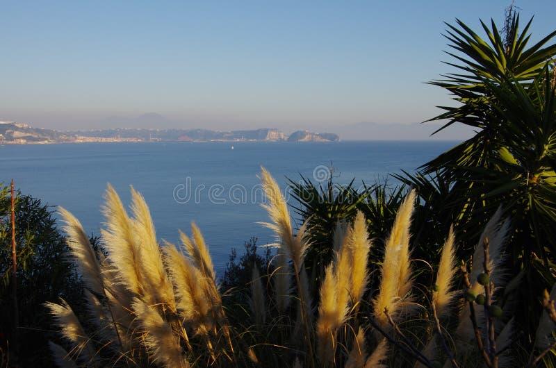 Μπους Cortaderia και του κόλπου της Νάπολης στοκ εικόνες