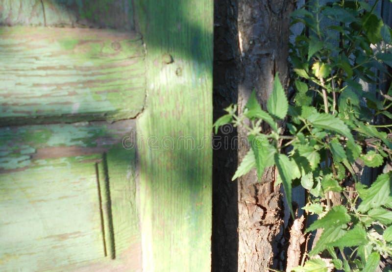 Μπους nettles και της παλαιάς πόρτας στοκ φωτογραφίες
