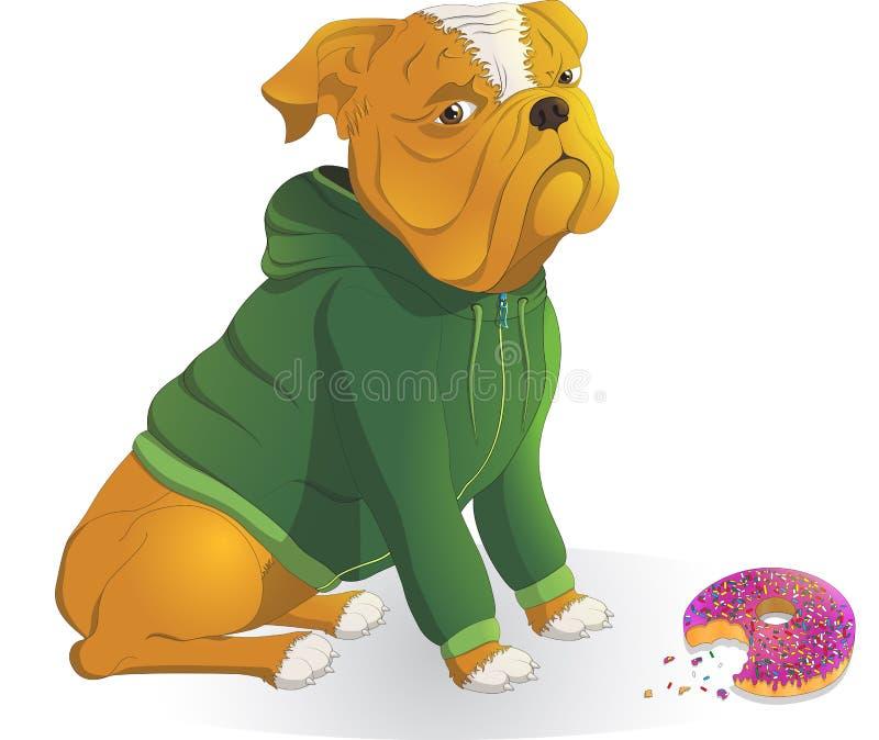 Μπουλντόγκ που φορά ένα σακάκι, doughnut γευμάτων ελεύθερη απεικόνιση δικαιώματος