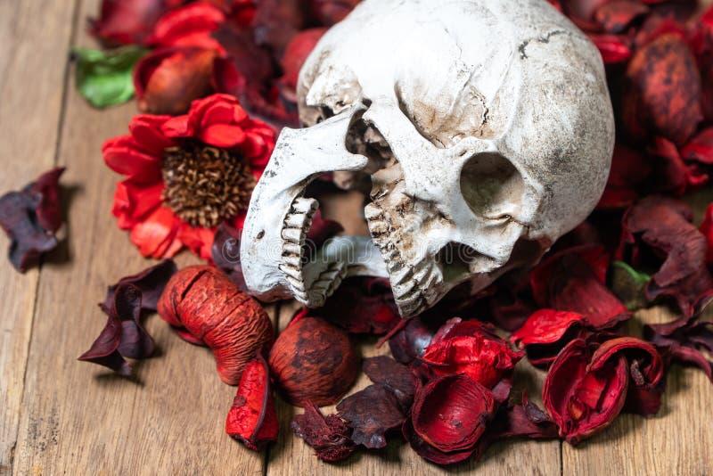 Μπροστά από το ανθρώπινο κρανίο που τοποθετείται στα κόκκινα ξηρά λουλούδια στο ξύλινο υπόβαθρο έννοια του θανάτου και αποκριών στοκ εικόνες
