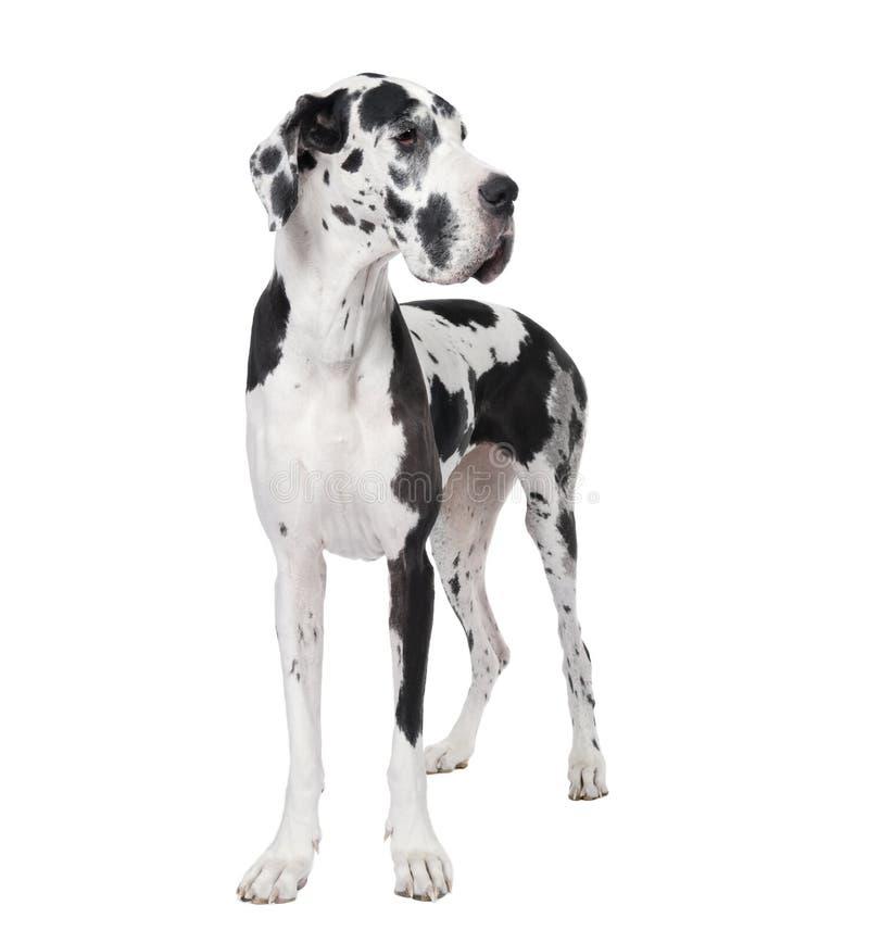 μπροστινό μεγάλο λευκό Δ&al στοκ φωτογραφία με δικαίωμα ελεύθερης χρήσης