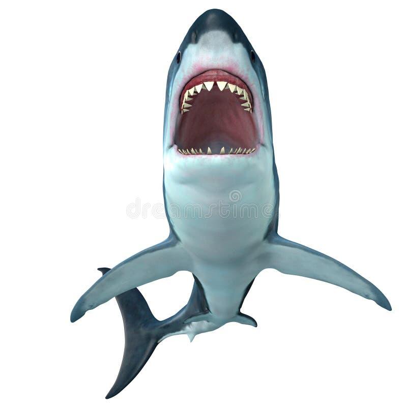 Μπροστινό σχεδιάγραμμα καρχαριών Megalodon διανυσματική απεικόνιση