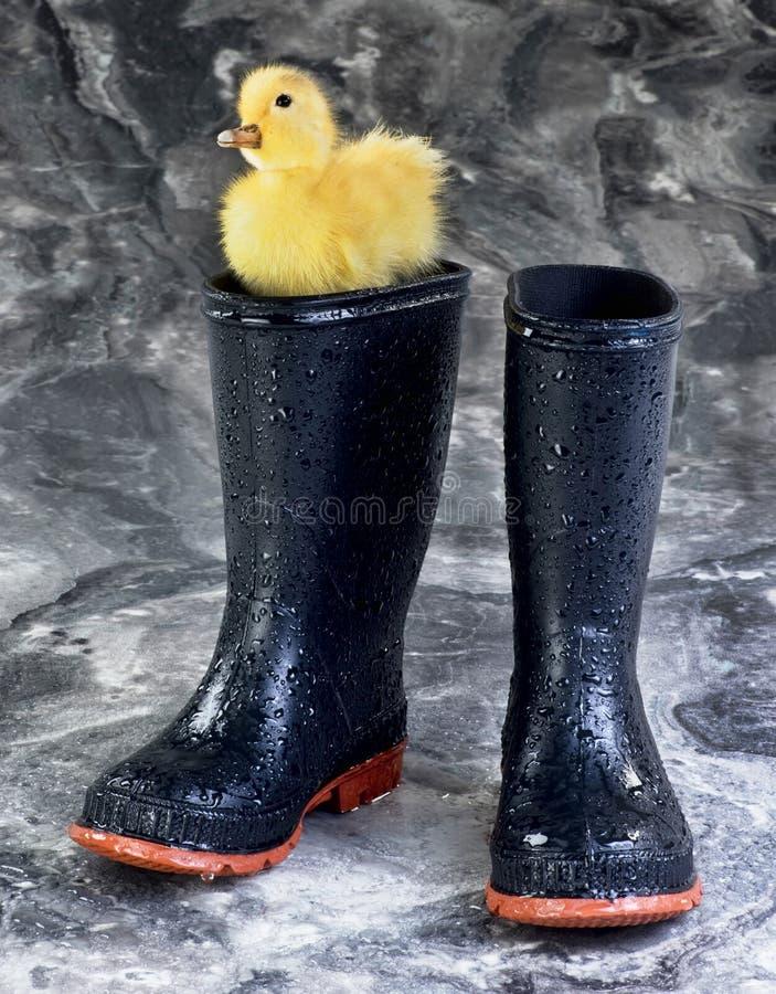 Μπότες και Ducky βροχής στοκ εικόνες