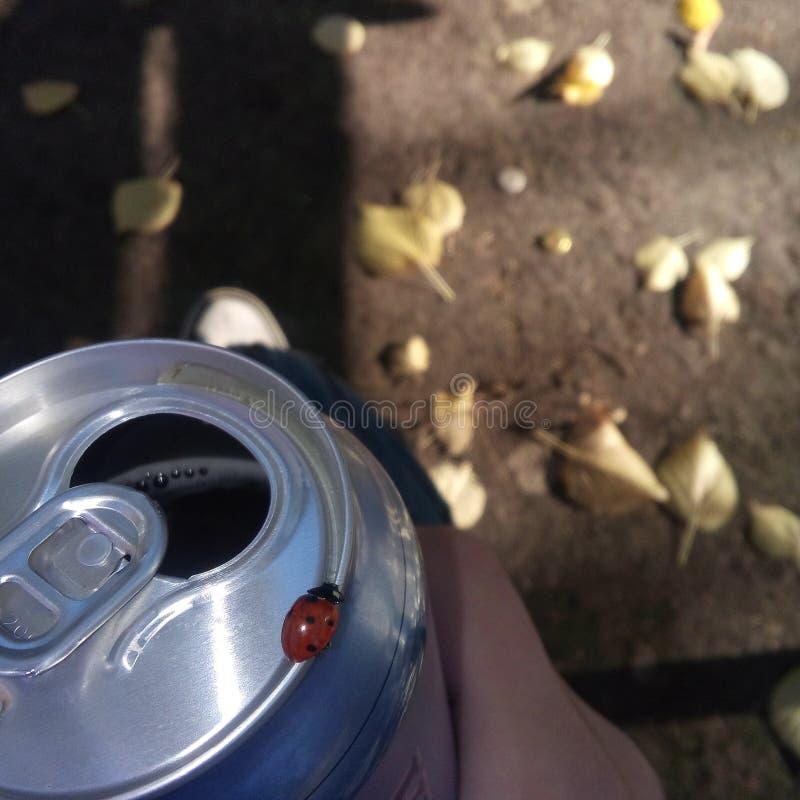 Μπύρα και άγρια περιοχές στοκ εικόνες με δικαίωμα ελεύθερης χρήσης