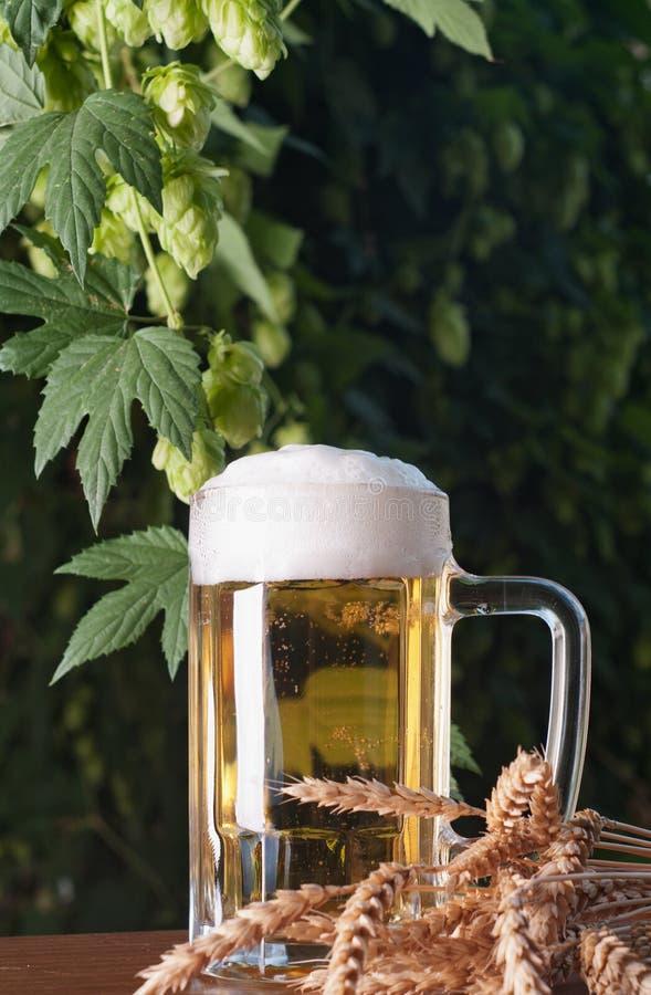 Μπύρα και λυκίσκος στοκ εικόνα με δικαίωμα ελεύθερης χρήσης