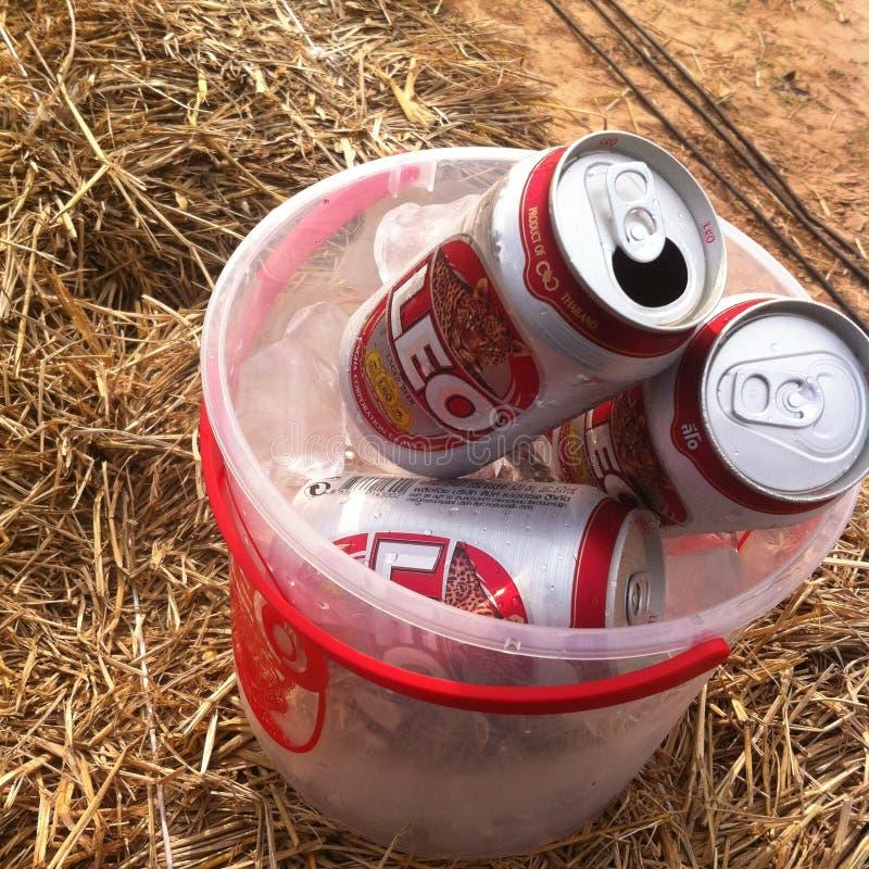 Μπύρα του Leo στοκ εικόνες