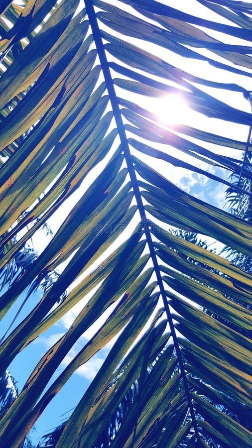 μπλε δέντρο σύστασης φωτογραφιών εγγράφου φοινικών φύλλων εικόνας βιβλίων ανασκόπησης λευκωμάτων στοκ εικόνες