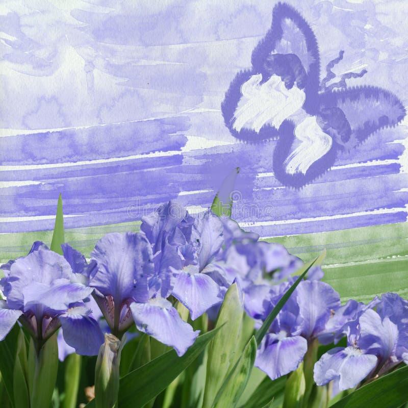 Μπλε ίριδα και μπλε πεταλούδα ελεύθερη απεικόνιση δικαιώματος