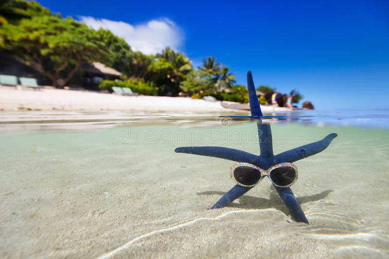 Μπλε αστερίας στην τροπική παραλία στοκ εικόνες