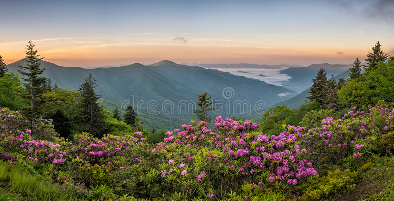 Μπλε βουνά κορυφογραμμών, Rhododendron, ανατολή στοκ εικόνες με δικαίωμα ελεύθερης χρήσης