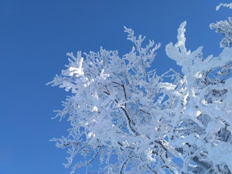 μπλε λευκό στοκ εικόνες