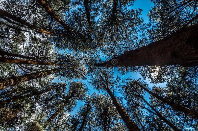 Μπλε μέσω του πρασίνου στοκ φωτογραφίες με δικαίωμα ελεύθερης χρήσης