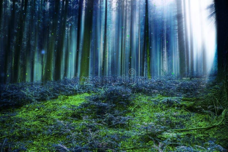 Μπλε μαγικό δάσος παραμυθιού με τα φω'τα στοκ εικόνες