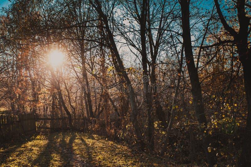 μπλε μακρύς ουρανός σκιών φύσης φθινοπώρου στοκ εικόνα με δικαίωμα ελεύθερης χρήσης