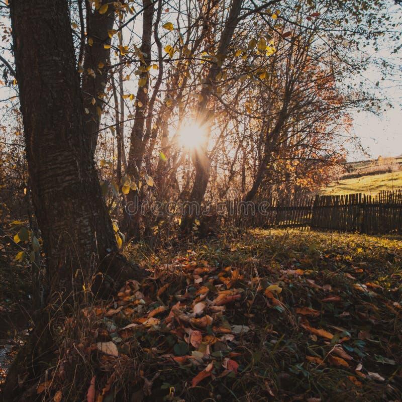 μπλε μακρύς ουρανός σκιών φύσης φθινοπώρου στοκ εικόνα