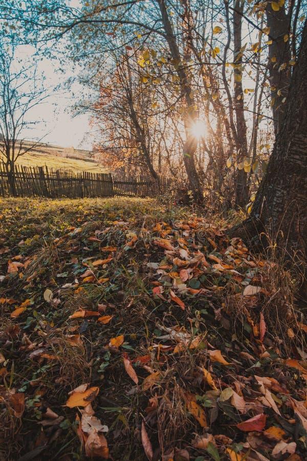 μπλε μακρύς ουρανός σκιών φύσης φθινοπώρου στοκ φωτογραφίες με δικαίωμα ελεύθερης χρήσης