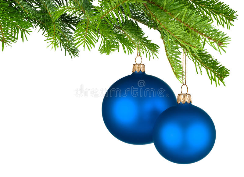 Μπλε μπιχλιμπίδια Χριστουγέννων που κρεμούν από τους φρέσκους πράσινους κλαδίσκους στοκ εικόνα