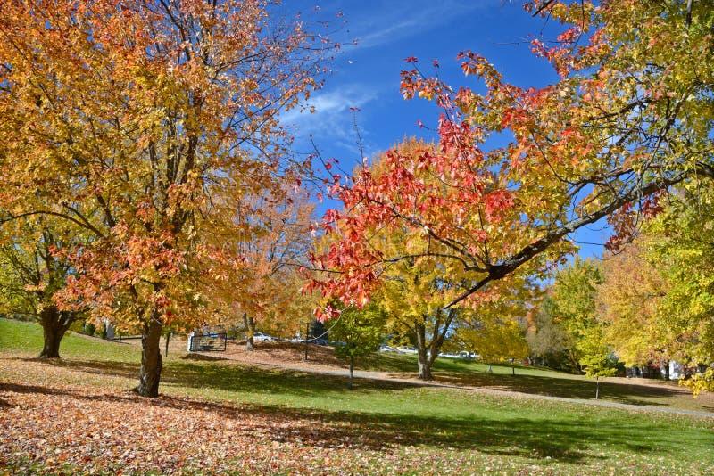μπλε νεφελώδες πτώσης πεδίων δέντρο ουρανού τοπίων μόνο κίτρινο στοκ εικόνες