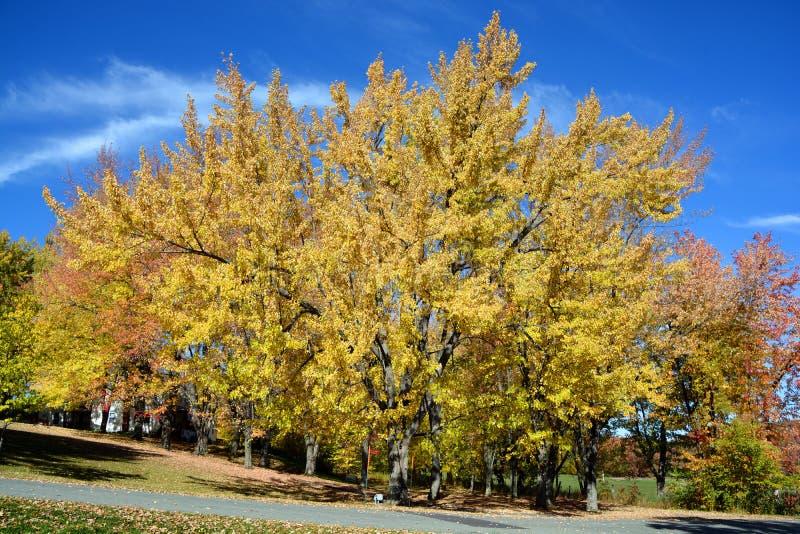 μπλε νεφελώδες πτώσης πεδίων δέντρο ουρανού τοπίων μόνο κίτρινο στοκ φωτογραφίες