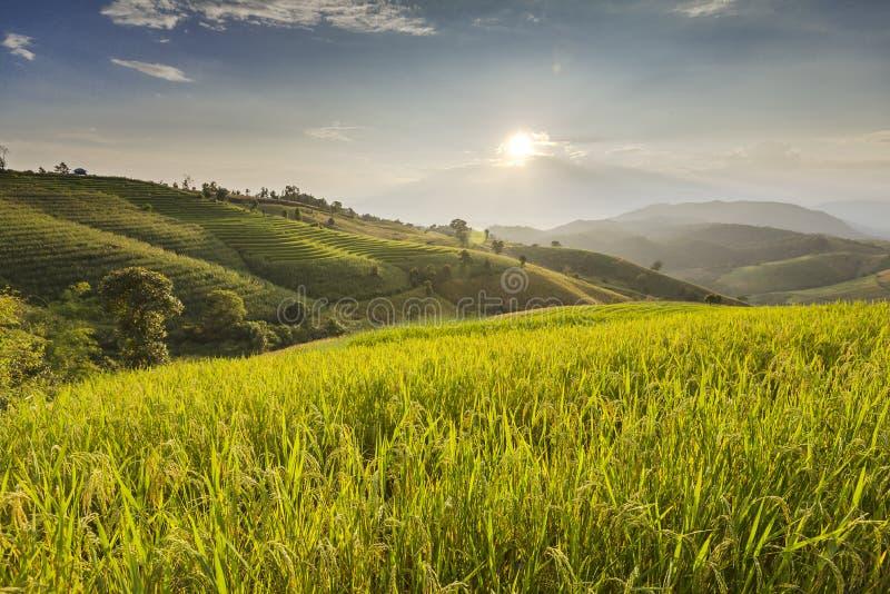 Μπλε ουρανός και πράσινος Terraced τομέας ρυζιού στο PA bong piang Chiangma στοκ εικόνα