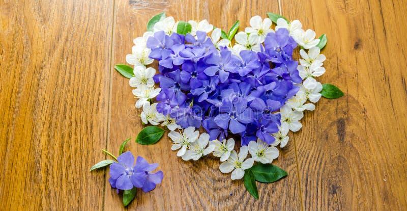 Μπλε λουλούδια άνοιξη με τα πράσινα φύλλα σε ένα πορτοκαλί υπόβαθρο στοκ εικόνα με δικαίωμα ελεύθερης χρήσης