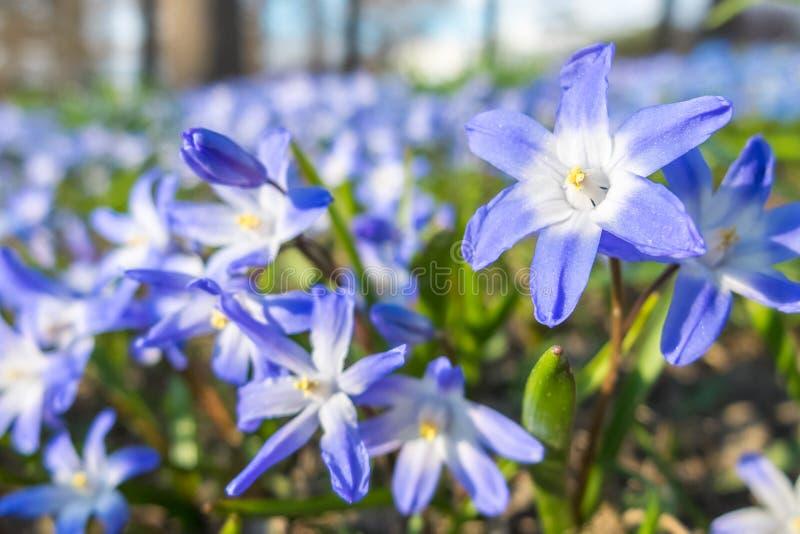 μπλε λουλούδια πεδίων στοκ φωτογραφία με δικαίωμα ελεύθερης χρήσης
