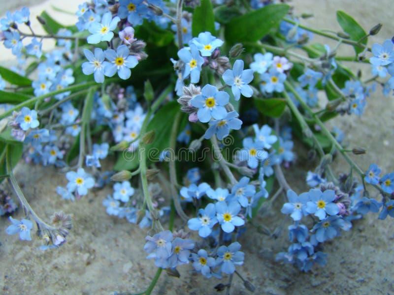 μπλε λουλούδια στοκ φωτογραφία με δικαίωμα ελεύθερης χρήσης