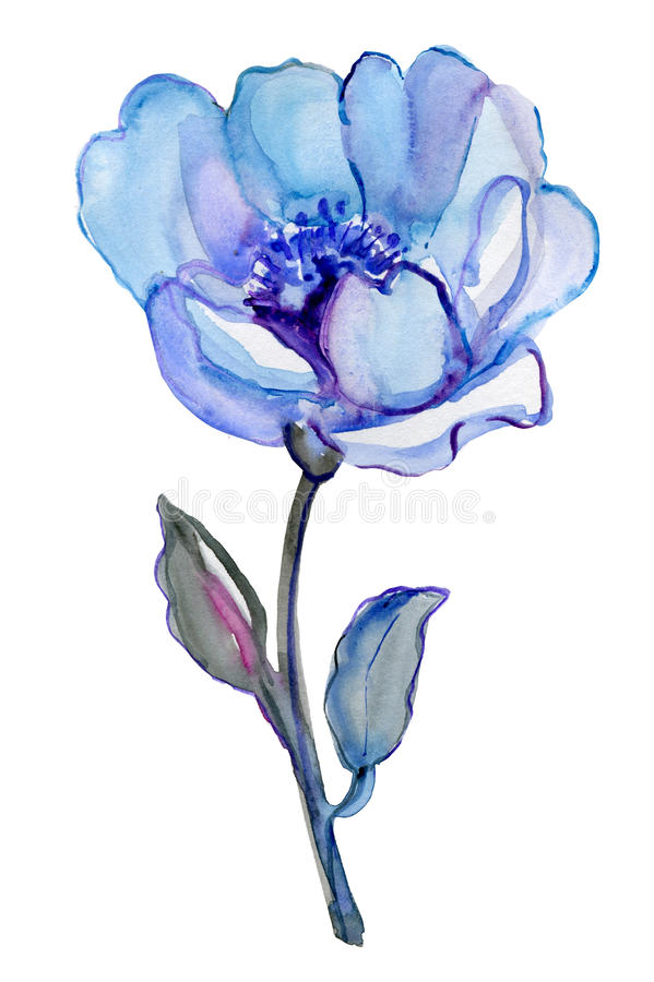 Μπλε λουλούδι που απομονώνεται σε ένα άσπρο υπόβαθρο ελεύθερη απεικόνιση δικαιώματος