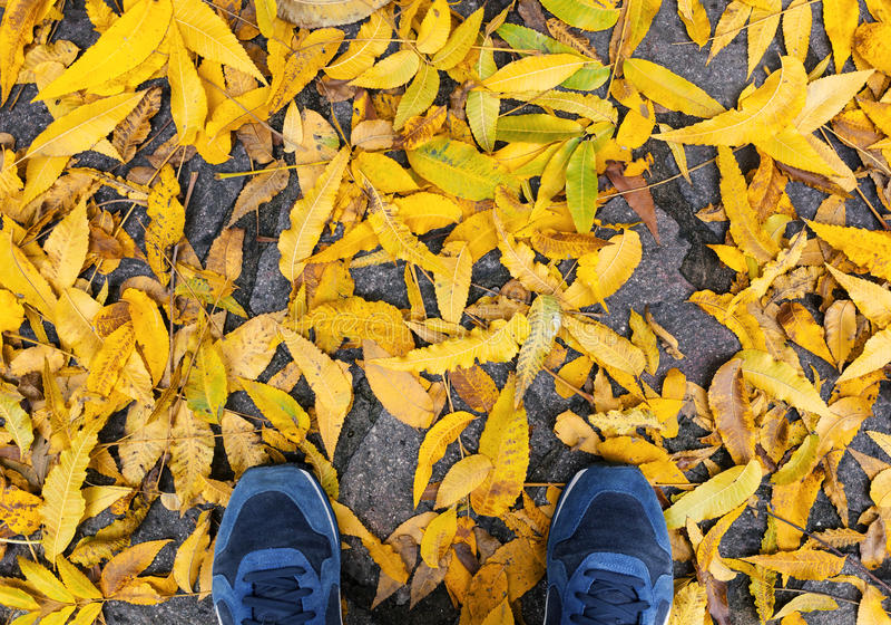 Μπλε παπούτσια με τα κίτρινα πεσμένα φύλλα στοκ εικόνα με δικαίωμα ελεύθερης χρήσης
