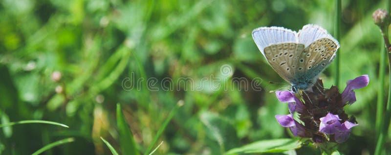 Μπλε πεταλούδα στην πράσινη χλόη στοκ εικόνα με δικαίωμα ελεύθερης χρήσης