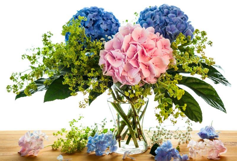 μπλε ροζ hydrangea στοκ εικόνα με δικαίωμα ελεύθερης χρήσης