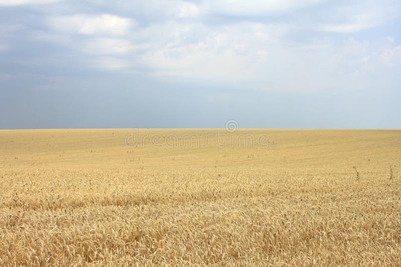 μπλε σίτος ουρανού εικόνας hdr πεδίων χρυσός στοκ εικόνα με δικαίωμα ελεύθερης χρήσης